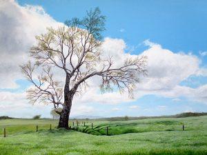 boyd-rd-tree